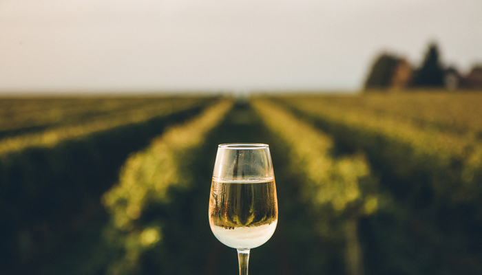 Why You Need to Go On A Wine Tour This Summer